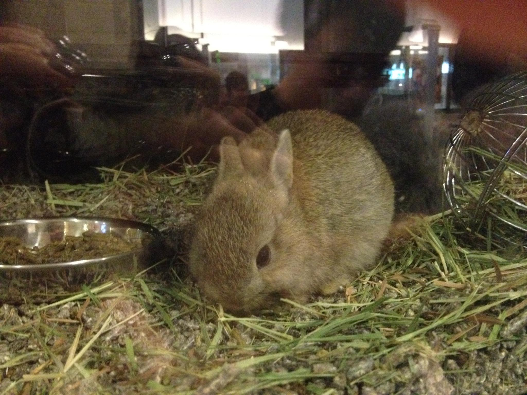 Cute Baby Rabbit!